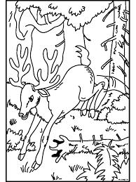 Kleurplaat Hert In Het Bos Kleurplatennl