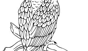 Bald Eagle Coloring Page Bald Eagle Coloring Page Bald Eagle