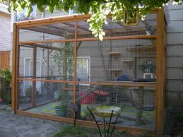 About Catios & Cat Enclosures
