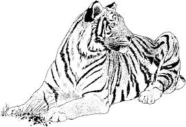 Small Picture Printable Tiger Coloring Pages Coloring Coloring Pages