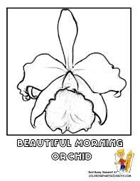 Small Picture Free Flower Coloring Pages Orchid Flower Iris Picture Flower