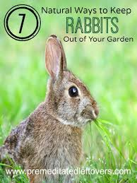 7 natural ways to repel rabbits from your garden keep rabbits out of your garden