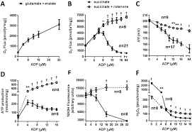 Mitochondrial Functional Parameters As A Function Of Clamped
