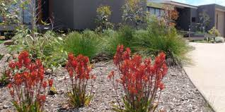 the case for native plants in your backyard