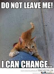 Needy Cat Needs You! Please Stay! by TheCrimsonShadow - Meme Center via Relatably.com