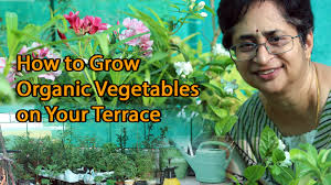 Organic Kitchen Garden How To Grow Organic Vegetables Terrace Garden Youtube