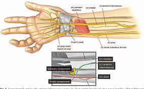 supercharged end to side anterior interosseous nerve to