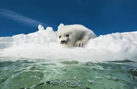 Image result for icy images