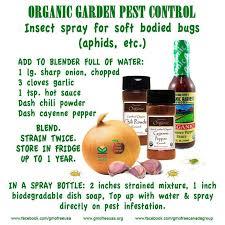 photos of organic garden pest control