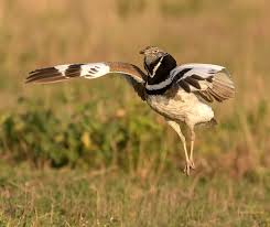 Afbeeldingsresultaat voor afbeelding bijzonder gedrag vogels