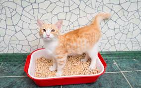 an orange and white cat stands in a litter box with wood pellets