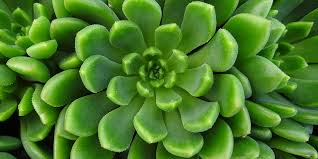 how to plant and care for succulents