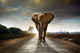 Elephant 4K Wallpapers - Top Free ...