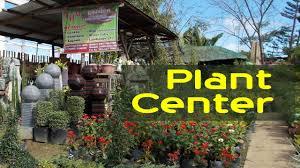 garden center flower decorative plants philippines you