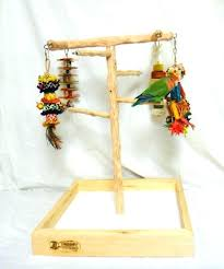 lovebird on play gym stand parrot tree bird parakeet hanging