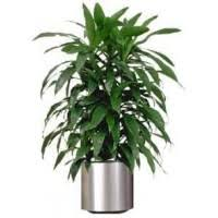 order plants online. Order Plants Online In Noida,Plant Nurseries Hyderabad,Buy Bangalore, O