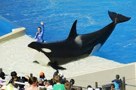 A new attraction could be coming to SeaWorld San Diego - The San ...
