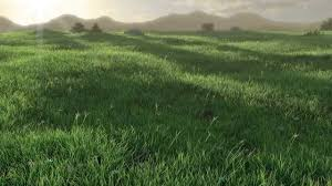 green grass field animated. Green Grass Field Animated E