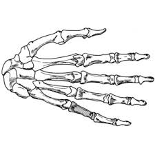 Small Picture Coloring page hand skeleton draw it 2 Pinterest Skeletons
