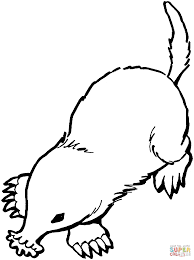 Small Picture Star nosed mole coloring page Free Printable Coloring Pages