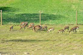 deer fence installation fencing posts can be separated and placed quite far apart just make46
