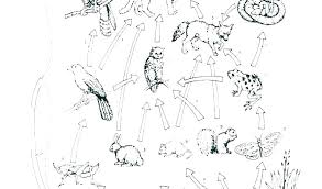 Food Web Coloring Pages Chain Sheets Simple Page Des