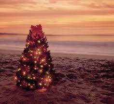 What Christmas Is Like In HawaiiChristmas Tree Hawaii