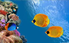 Aquarium Live Wallpaper For Pc - NOSIRIX