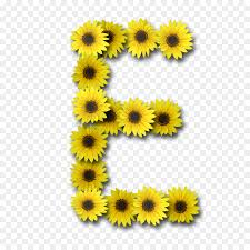 letter case alphabet sunflower