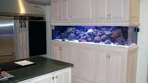office aquarium. Office Design : 5 Litre Glass Fish Tank Bowl Aquarium Water