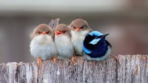 1920x1080 Passerine Birds Laptop Full ...