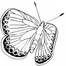 Free Butterfly Coloring Pages Printable Butterfly Coloring Page