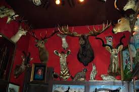 animal heads on wall designs every square inch of white head art nz par