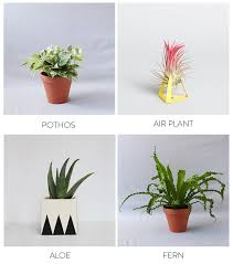 plants are a great way to bring a little natural beauty indoors they clean the air in your home and add color to every room your bathroom however can be