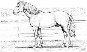 Disegni Da Colorare Animali Di Cavalli Migliori Pagine Da Colorare