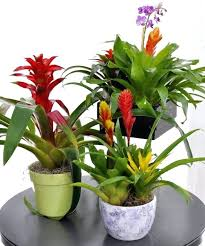 great office plants. Flowering Office Plants A Garden Is The Perfect Gift For New Or Home Great .