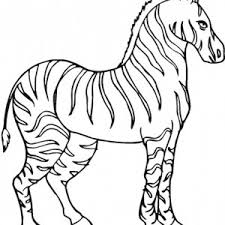 Small Picture Strong Zebra Coloring Page Strong Zebra Coloring Page Color Nimbus