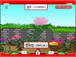 Flowers Name In Marathi Best Flower Site