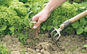 10 non toxic ways to control weeds