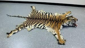 faux bear skin rug with head tiger rugs ideas fur fake for nursery
