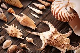 Seashell Collection Flat Lay Still Life