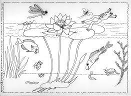 Levendiguitgevernl Als Een Lotus