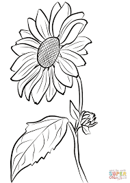 Small Picture Sunflower coloring page Free Printable Coloring Pages