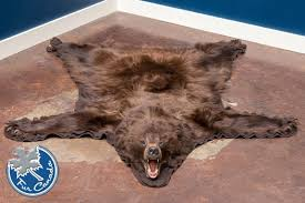 cinnamon bear black bear skin rugs