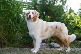 Hier erfährst du alles über die rasse deines hundes. Die 22 Sussesten Hunderassen Der Welt Mit Bildern Edogs