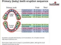 Baby Teeth Age Chart Delayed Eruption Of Teeth Baby Teeth