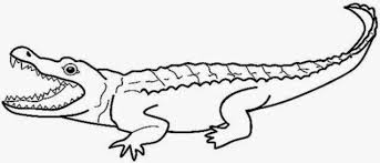 Small Picture Alligator Coloring Pages 9 Coloring
