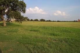 grass field. Grass Field