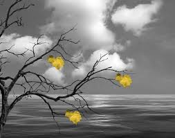black white yellow wall art tree with