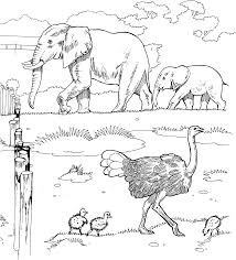 Small Picture Printable 39 African Animal Coloring Pages 3752 African Animal